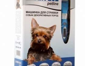 Як вибрати машинку для стрижки собак фото